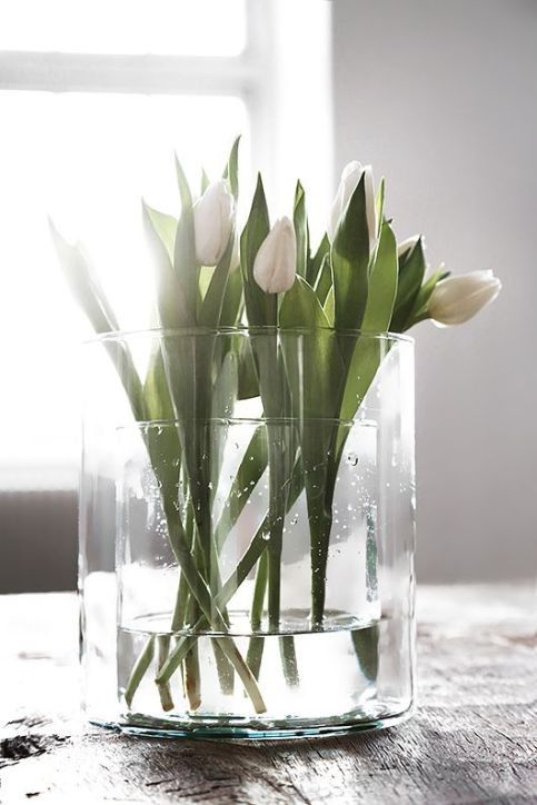 2016 Mar - white tulips, glass vase in sun