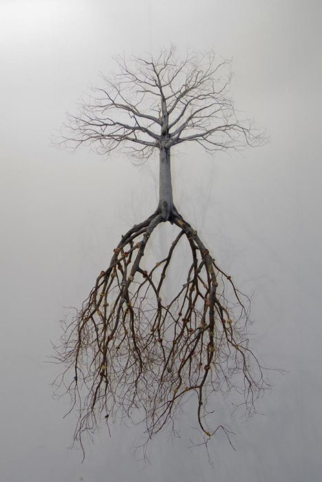 2016-nov-20-tree-with-roots
